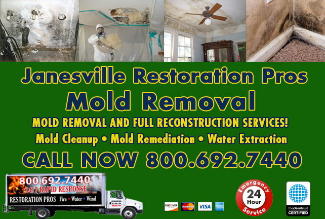 Janesville mold damage cleanup