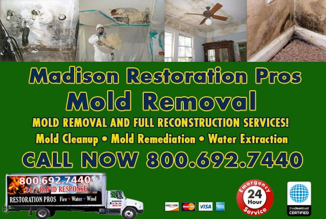 Madison mold damage cleanup